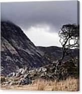 Weathered Tree Canvas Print