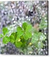 Web And Clover Canvas Print