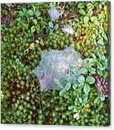 Web In Moss Canvas Print