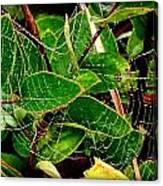Web4 Canvas Print