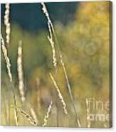 Weeds And Bokeh Canvas Print