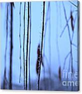Weeping Forest Frost Canvas Print