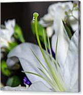 Weeping Lily Canvas Print