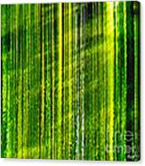 Weeping Willow Tree Ribbons Canvas Print