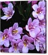 Weigela Blossoms Canvas Print