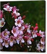 Weigela Branch Canvas Print
