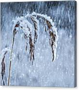 Weight Of Winter Canvas Print
