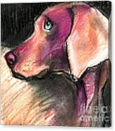 Weimaraner Dog Painting Canvas Print