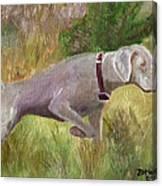 Weimaraner Point Canvas Print