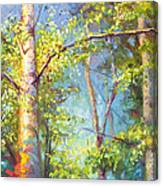 Welcome Home - Birch And Aspen Trees Canvas Print