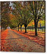Welcome Home Bradford Pear Lined Drive-way Canvas Print