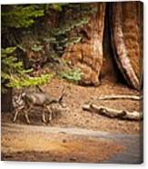 Welcome Home - Sequoia National Forest Canvas Print