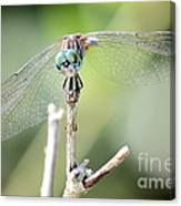 Welcome To My World Dragonfly Canvas Print