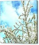 Welcome Vintage Spring Canvas Print