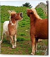 We're Just Horsing Around Canvas Print