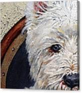 West Highland Terrier Dog Portrait Canvas Print