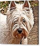 West Highland White Terrier Canvas Print