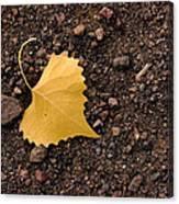 West Texas Autumn Canvas Print