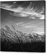 West Wind Bw Canvas Print