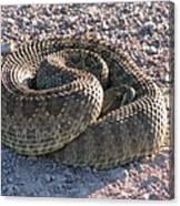 Western Dakota Prairie Rattlesnake Canvas Print