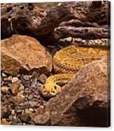 Western Diamondback Rattlesnake 2 Canvas Print