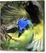Western Diamondback Rattlesnake Striking Green Jay Canvas Print