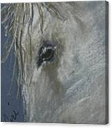 Western Dreamer Canvas Print