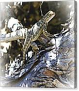 Western Fence Lizard Aka Blue-belly Lizard Canvas Print
