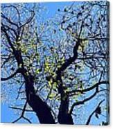 Western Michigan Trees 1 Canvas Print