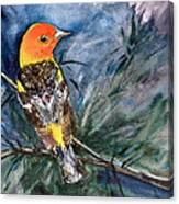 Western Tanager At Mt. Falcon Park Canvas Print