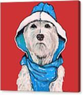 Westie In A Blue Slicker Canvas Print