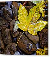 Wet Autumn Leaf On Stones Canvas Print