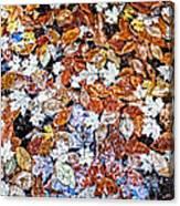 Wet Autumn Leaves Canvas Print