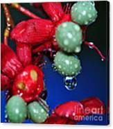 Wet Berries Canvas Print
