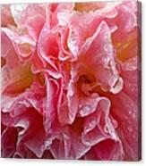 Wet Hollyhock Flower Upclose Canvas Print