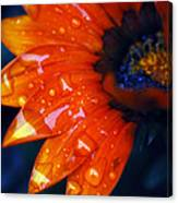 Wet Petals Canvas Print
