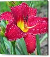 Wet Red Razzmatazz Daylily 1 Canvas Print