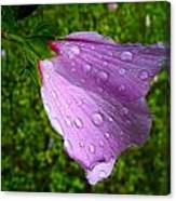 Wet Rose Of Sharon 2 Canvas Print