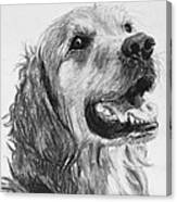 Wet Smiling Golden Retriever Shane Canvas Print