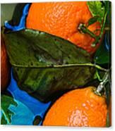 Wet Tangerines Canvas Print