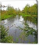 Wetland Greens Canvas Print