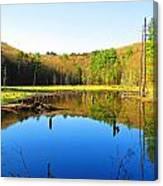 Wetland Morning Calm Canvas Print