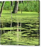 Wetland Reflection Canvas Print