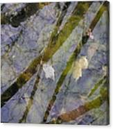 Wetland Reflections Canvas Print
