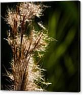 Wetland Sparkles Canvas Print