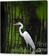 Wetland Wader Canvas Print