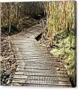 Wetland Walk Canvas Print