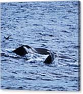 Whale 2 Canvas Print