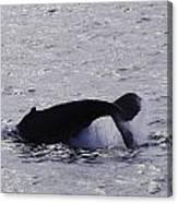 Whale Bw2 Canvas Print