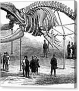 Whale Skeleton, 1866 Canvas Print